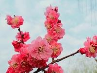 华州太平湖春色